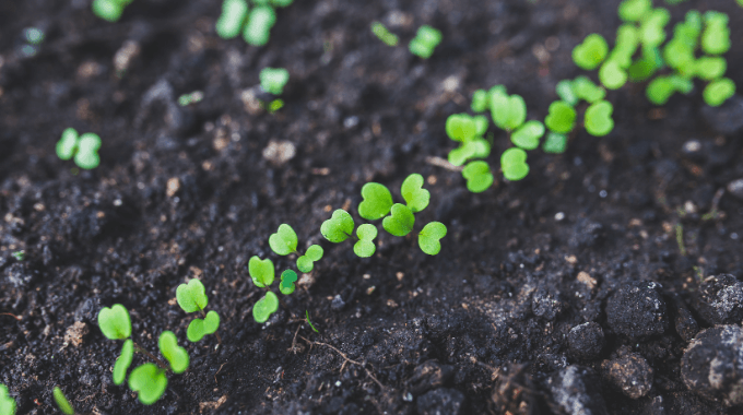 自然栽培と有機栽培、慣行農法ってどう違うの?